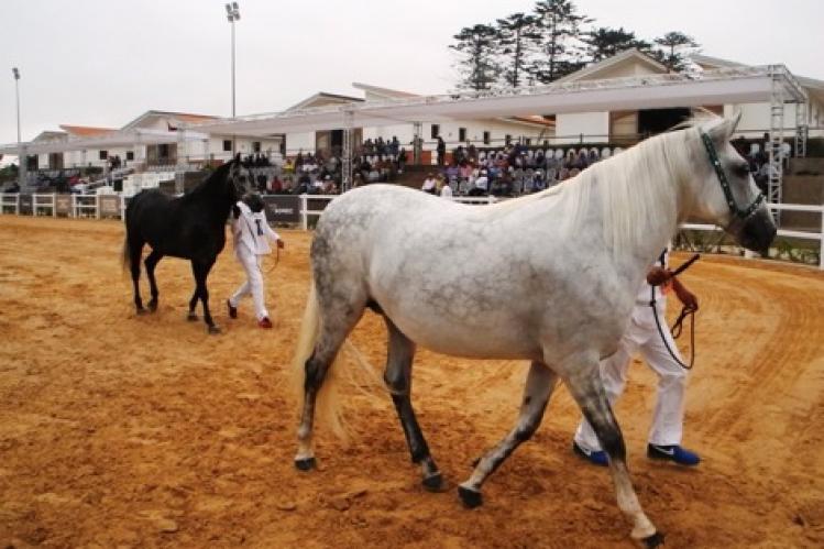صورة منح مساعدات بـ 1250 درهم شهريا للخيول لا أساس له من الصحة