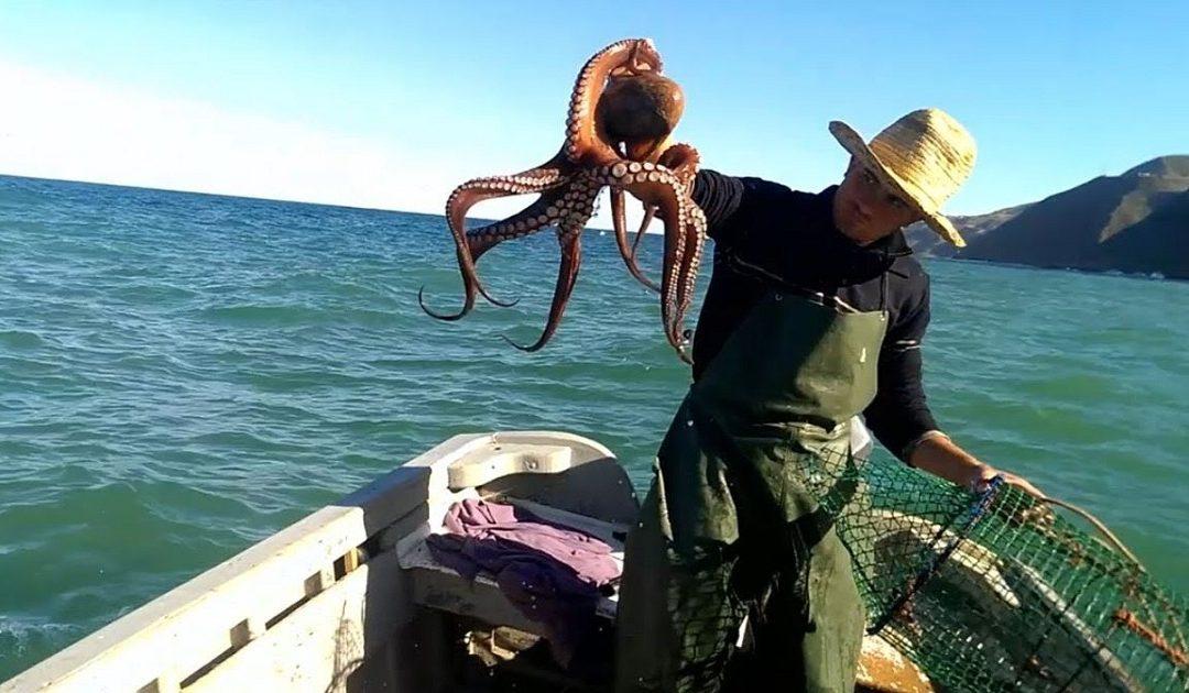 صورة في موسم صيد الأخطبوط .. لوبي الفساد يغضب مهنيي الصيد التقليدي بأسفي