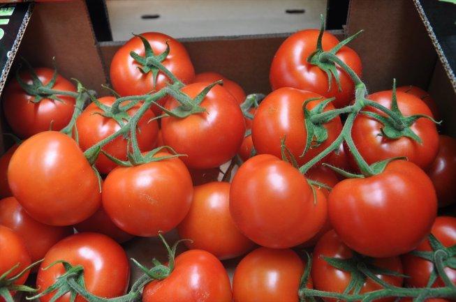 صورة بسبب احتوائها على فيروس .. روسيا تحظر استيراد الطماطم المغربية