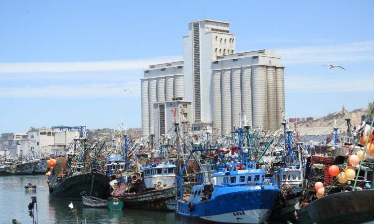 صورة جمعية السمك الذهبي : من المخجل إضراب مراكب السردين من أجل العمل خارج القانون بأسفي