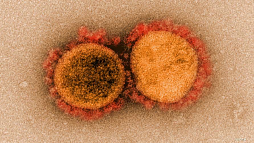 صورة منظمة الصحة العالمية تؤكد تفشي سلالة كورونا الجديدة في 3 دول أخرى بعد بريطانيا