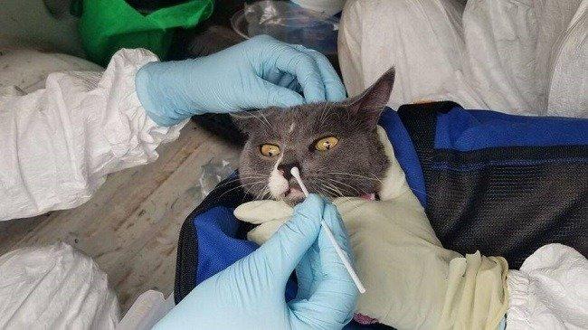 صورة مبتكر اللقاح الروسي : جميع الحيوانات معرضة للإصابة بكورونا