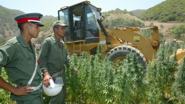 """صورة هذه شروط الحصول على رخصة زراعة  """"الكيف"""" بالمغرب"""