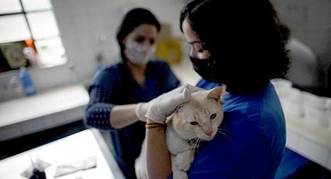 """صورة روسيا تسجل أول لقاح في العالم للحيوانات ضد فيروس """"كورونا"""""""