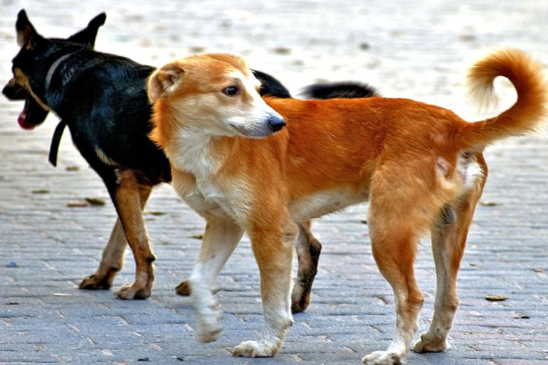 صورة مصيبة .. شخص يذبح الكلاب والقطط ويقوم باغتصابها وجمعية حقوقية تدخل على الخط
