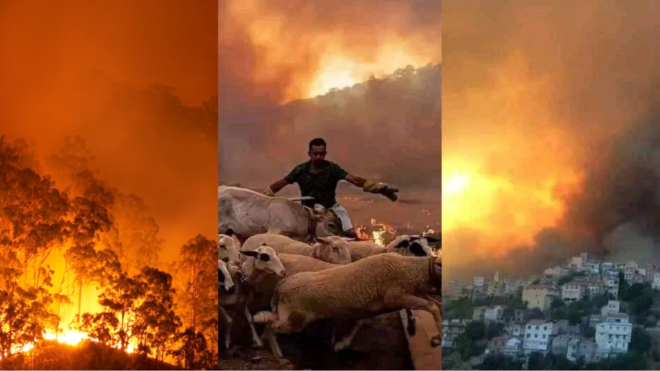 """صورة """"حكومة القبايل"""" تتهم النظام العسكري بإشعال الحرائق ل""""إبادتهم"""""""